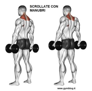 Esercizi spalle www.gymblog.it Summer shoulders